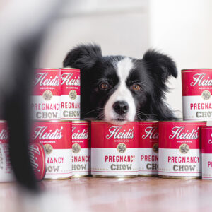 Border Collie Hündin mit Campbells Suppendosen a la Andy Warhol